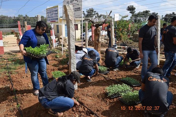 Employees volunteering in the kitchen garden