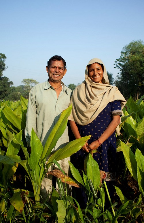 A farmer standing in his turmeric crop with his wife in Ambota Village, Una (Himachal Pradesh) where his agricultural productivity has been enhanced through JICA supported Swan River Integrated Watershed Management Project