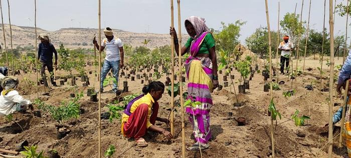 Sony Pictures Networks plants 8000 tree saplings in Satara Maharashtra