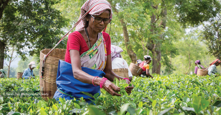 Tea pickers in Assam use VisionSpring eyeglasses for better productivity